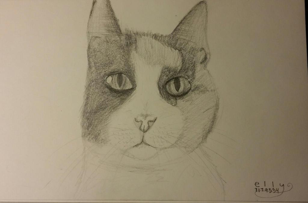 Kitten by skippymyboy