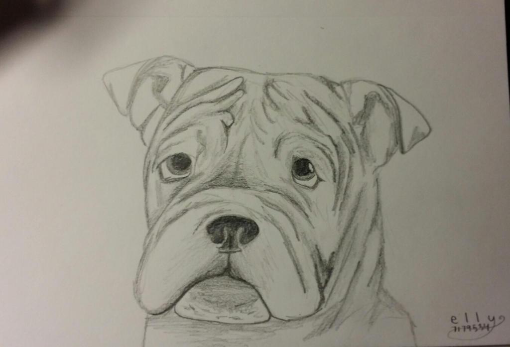 Bulldog Sketch by skippymyboy