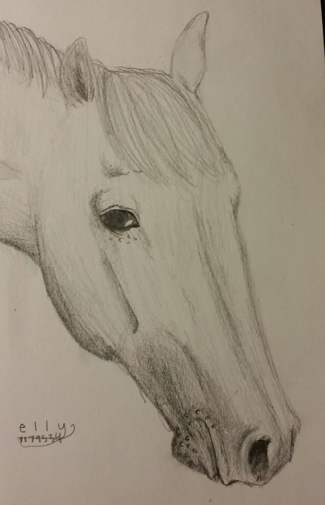 horse sketch by skippymyboy