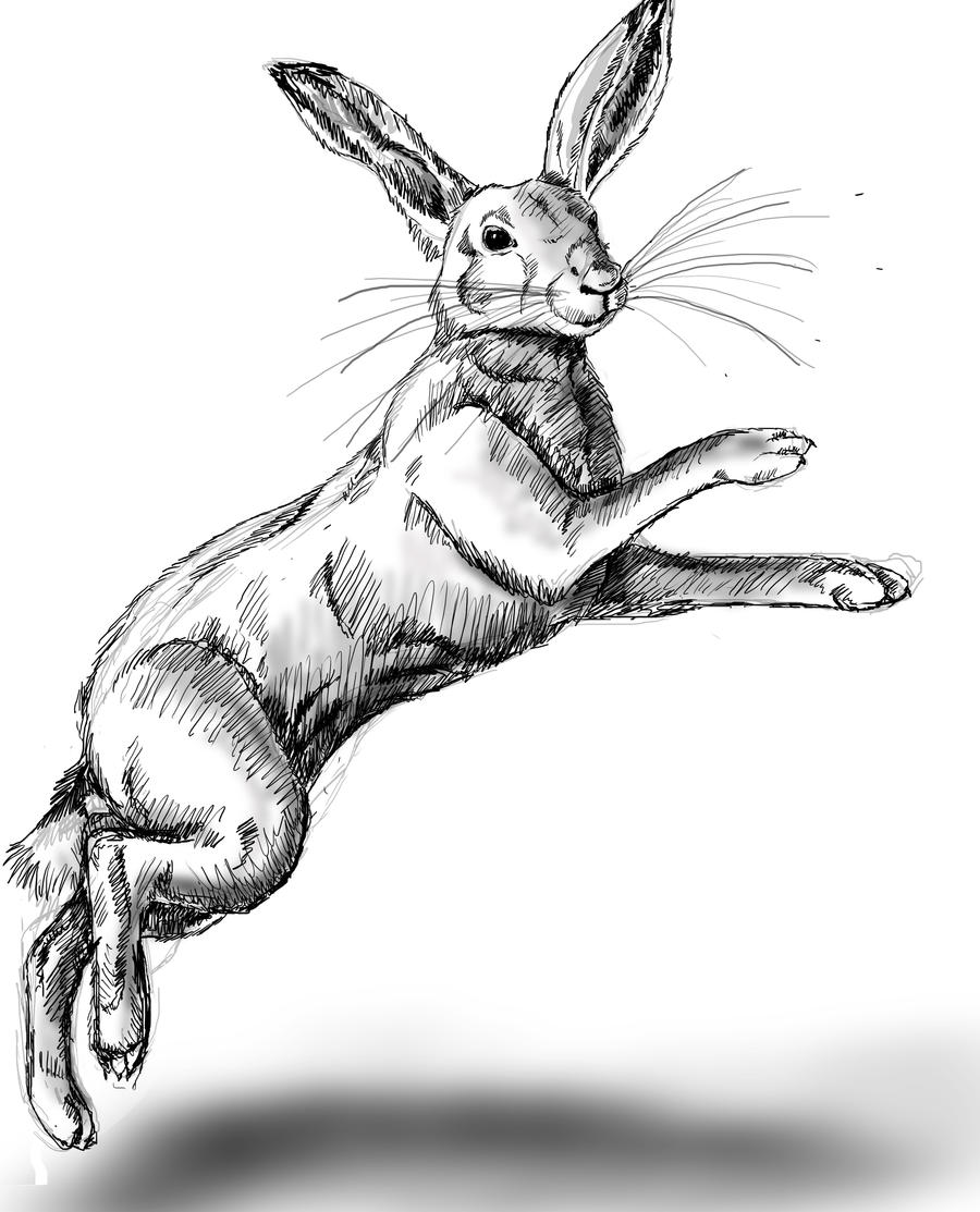 Rabbit jumping drawing
