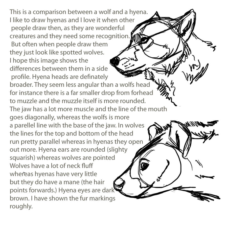 Difference Between Scrabble And Drawing : Hyena vs wolf comparison by tianithen on deviantart