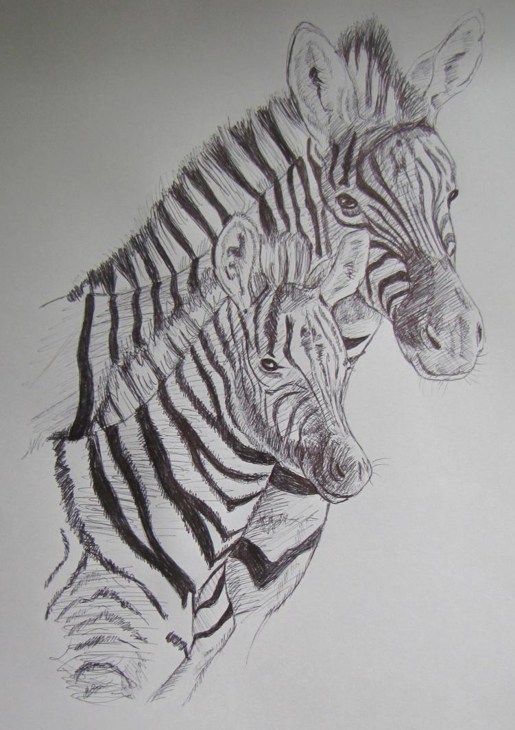 Zebra by Tianithen