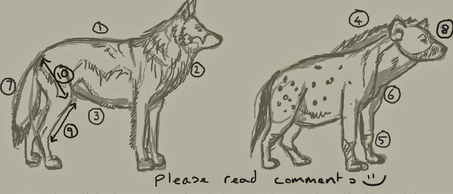 What are the similarities and differences between a wolf and a hyena?