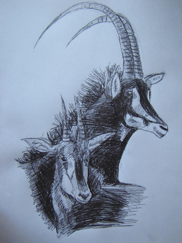 Sable antelope by Tianithen on DeviantArt