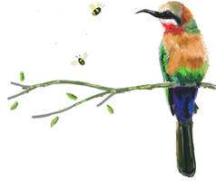 White fronted bee eater by Tianithen