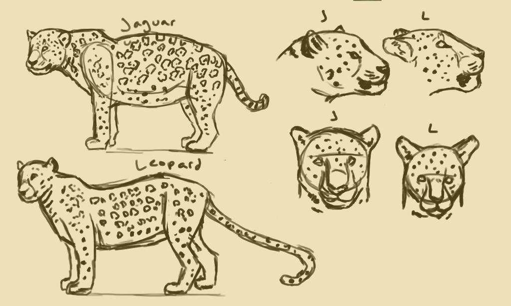 Jaguar Leopard Comparison By Tianithen On Deviantart