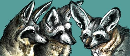 Bat Eared foxes by Tianithen
