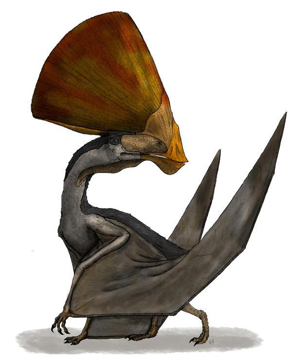 Tupandactylus - Final Version