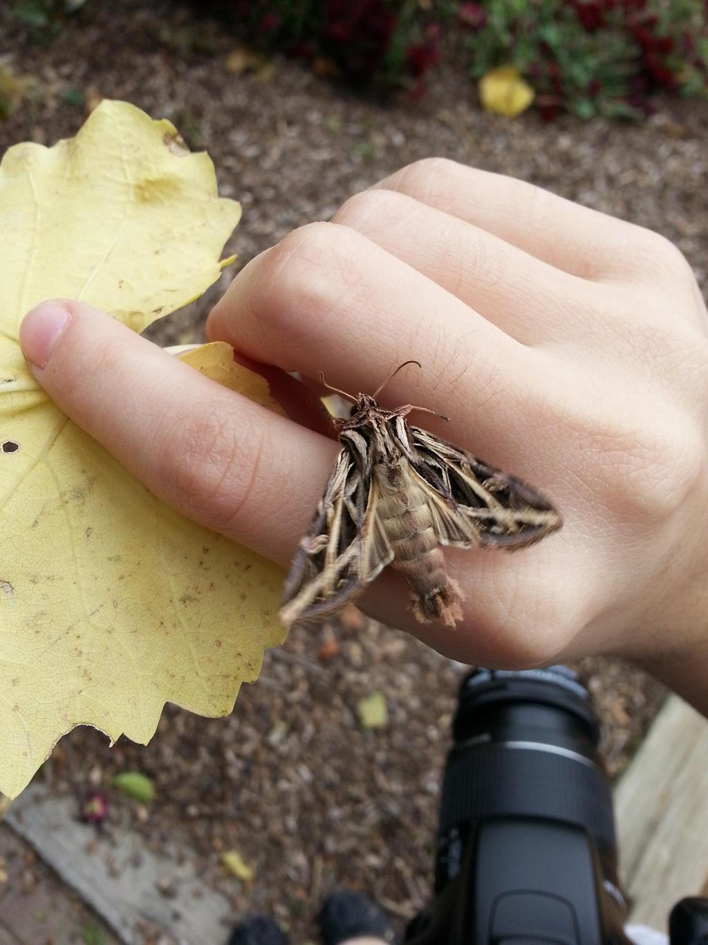 Mr. Moth[1] by AgentTuxedoBird