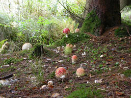 Kilder Forest 2