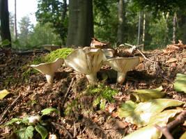 west Sussex fungi
