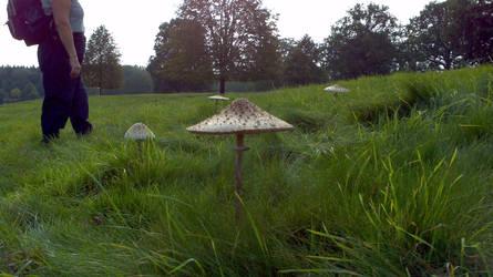giant parasols south dowms
