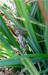 birth of dragonfly1 by beajaye1