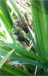 birth of dragonfly2 by beajaye1