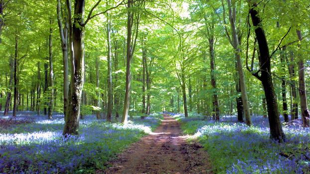 Walking through Bluebells and Beech Trees