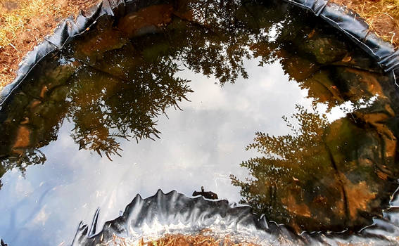 reflection pond refilled with rainwater