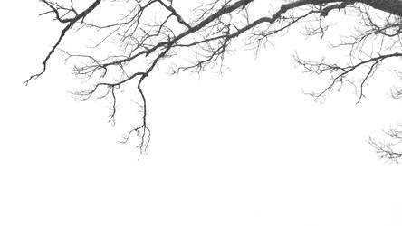 Tree, snow