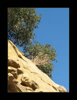 Cliff Shrubs by canology