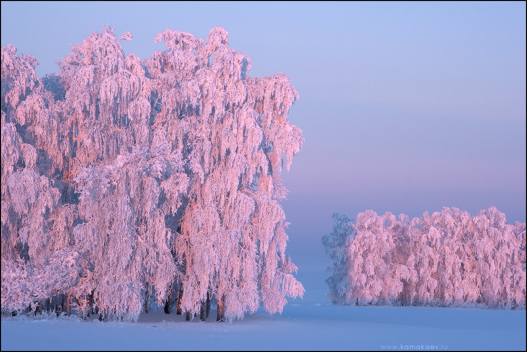 pink dawn by Kamakaev