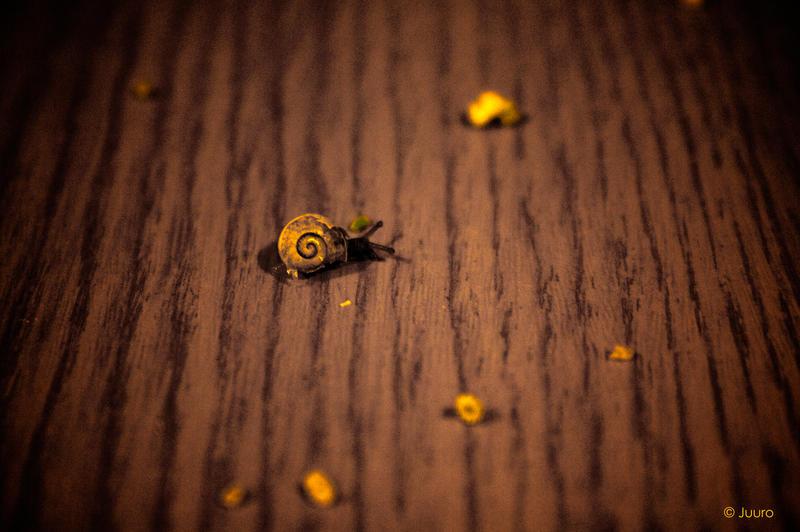 Suicide Snail