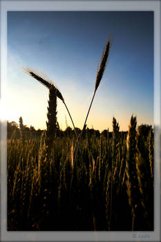 wheatballs with satisfaction