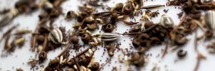 Seed by Juuro