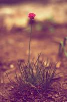 Porcupine Tree by Juuro