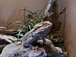 Lizard I by Baq-Stock