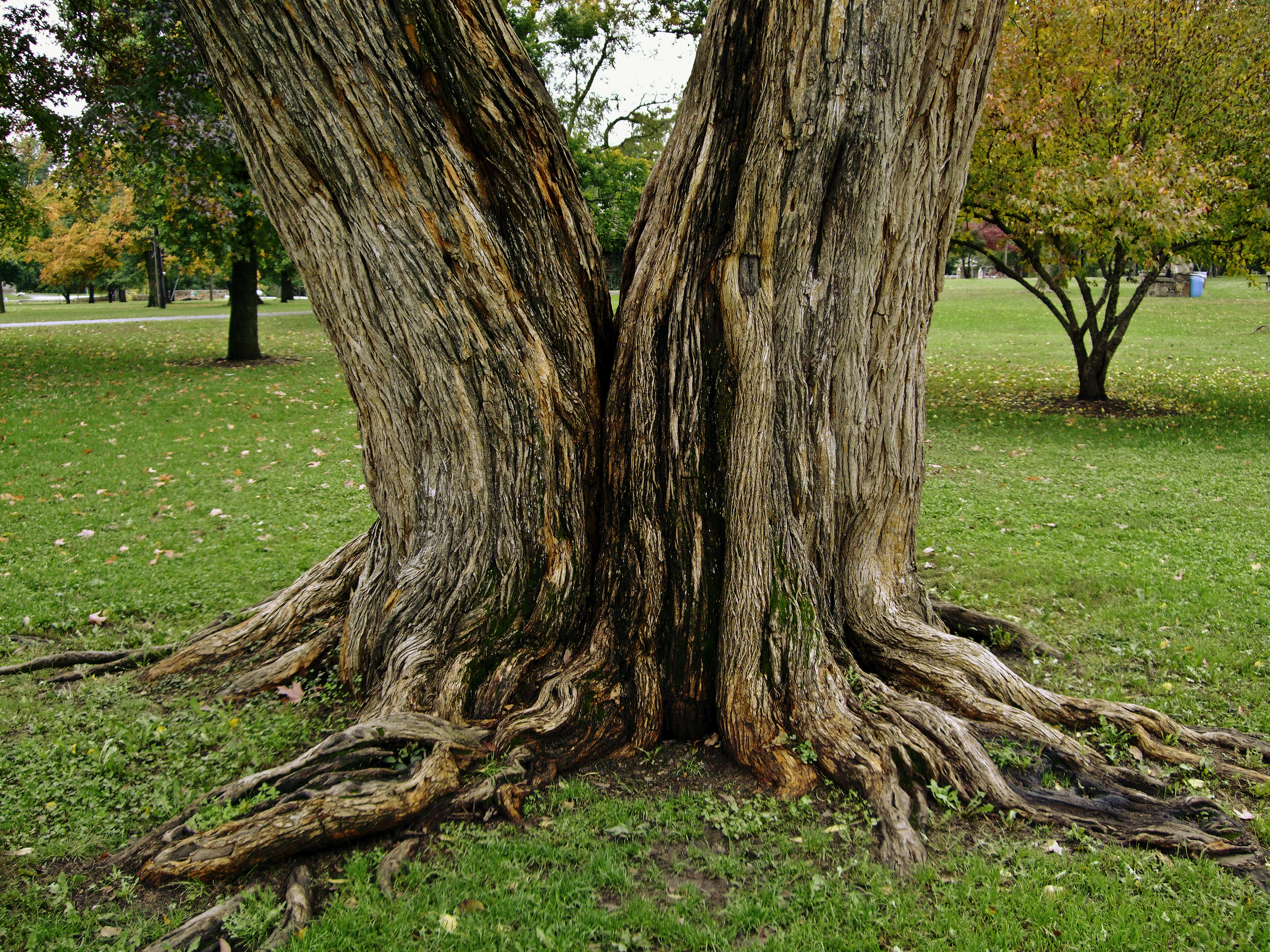 Fantasy Tree Trunk By Baq Stock On Deviantart