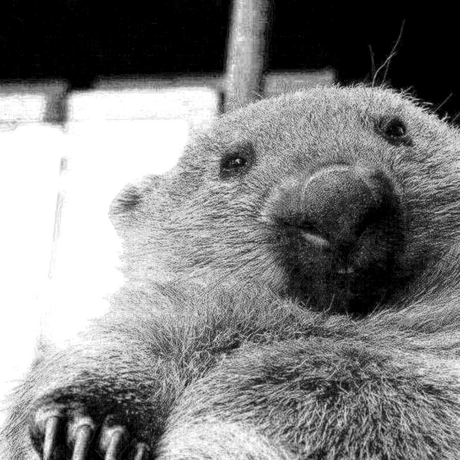 Biggest Wombat ever by DarsamNorogh