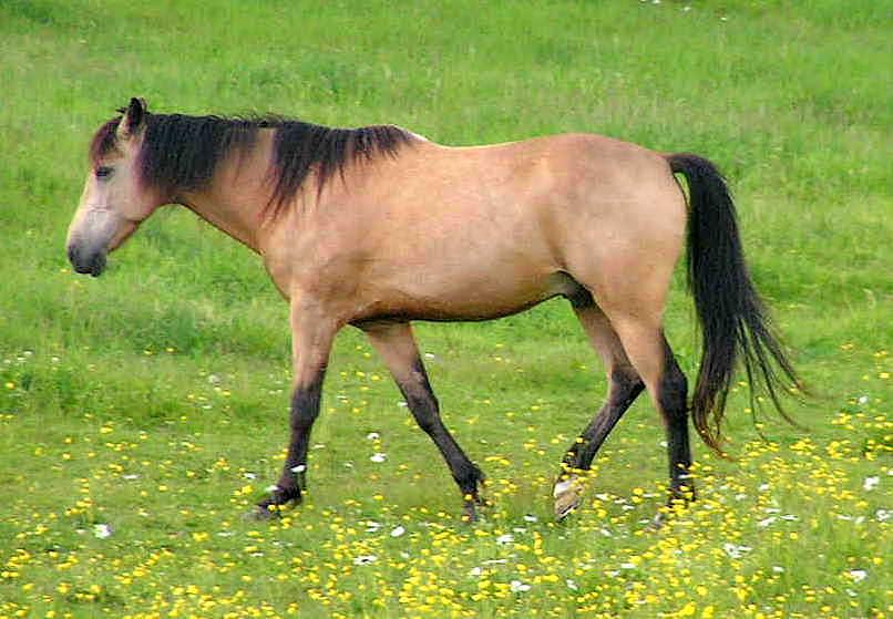 Horse in a Field by JocelyneR