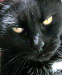 My Lovable Kitten by JocelyneR