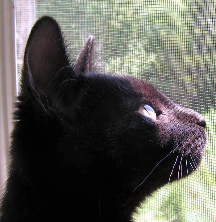 Screen Reflection on my Kitty by JocelyneR