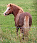 A Cute Pony