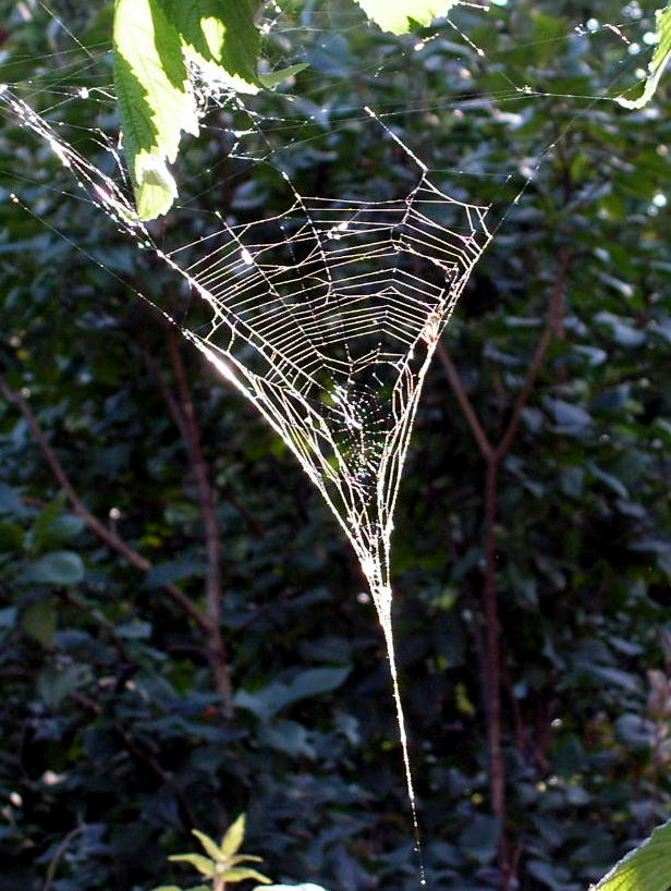 Cob Web by JocelyneR