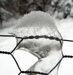 Icy Fence - close-up