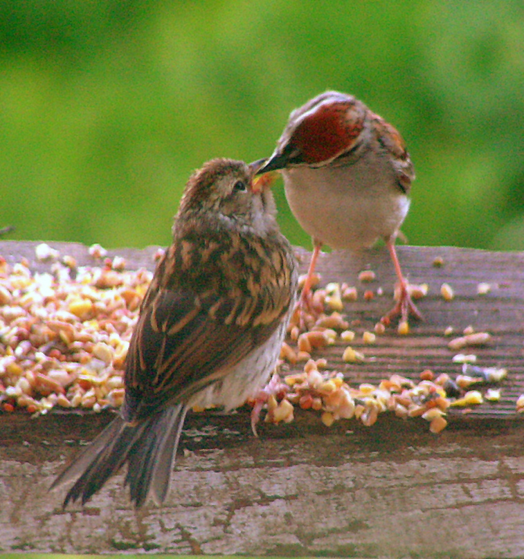 Mum Feeding... by JocelyneR