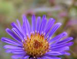 Purple Flower 02