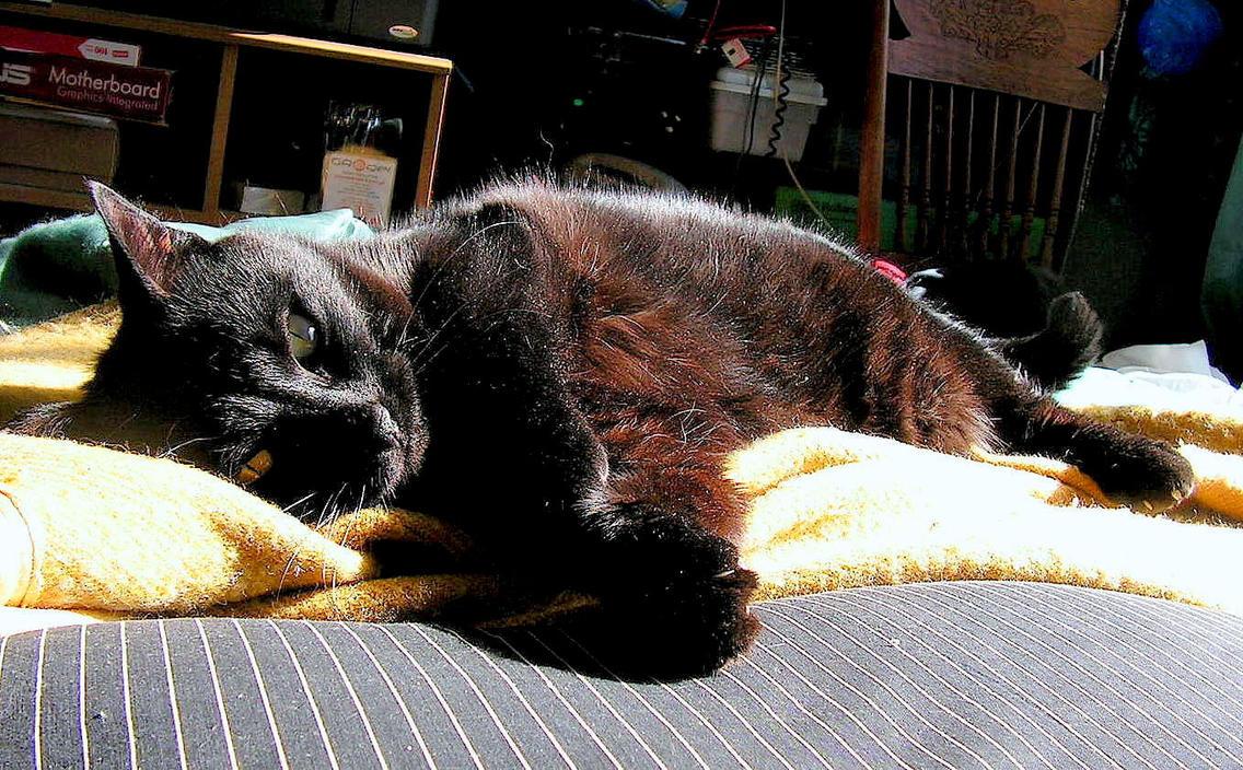 Poupine Resting at Last... by JocelyneR