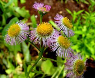 June Pretty Wild Flowers by JocelyneR