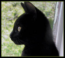 Poupine Discovering the Outside World by JocelyneR