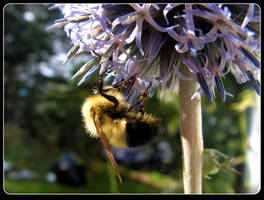Bumblebee On A Strange Flower by JocelyneR