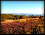 Colorful Bush In The Meadow In Fall by JocelyneR