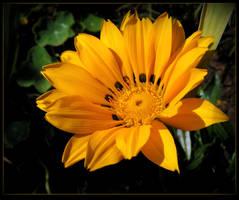 Pretty In Yellow by JocelyneR