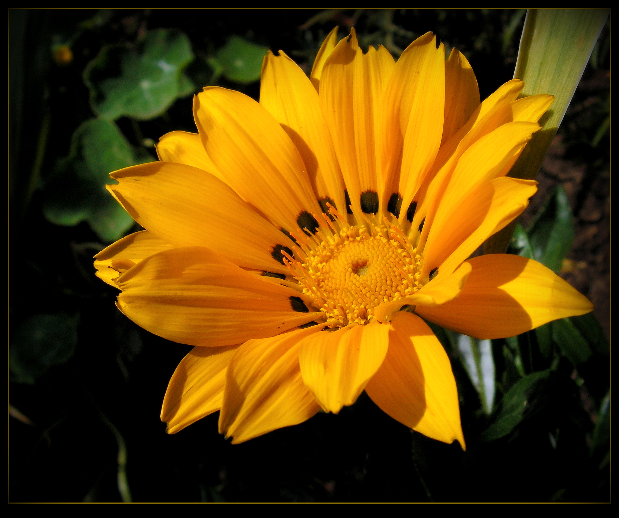Pretty In Yellow by JocelyneR