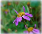 Little Violet Flower