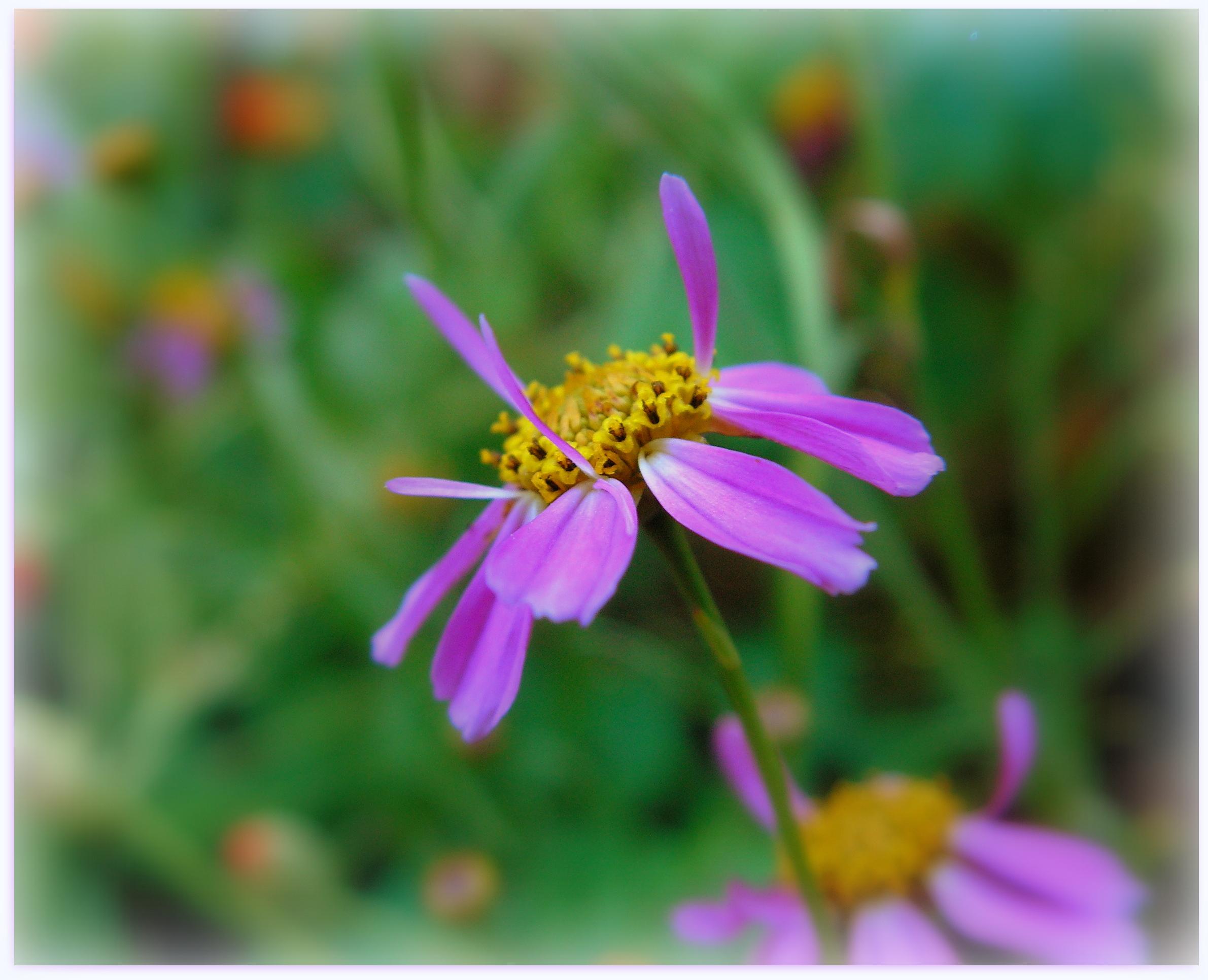 Little Violet Flower by JocelyneR