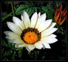 Pretty in white - for Tea by JocelyneR