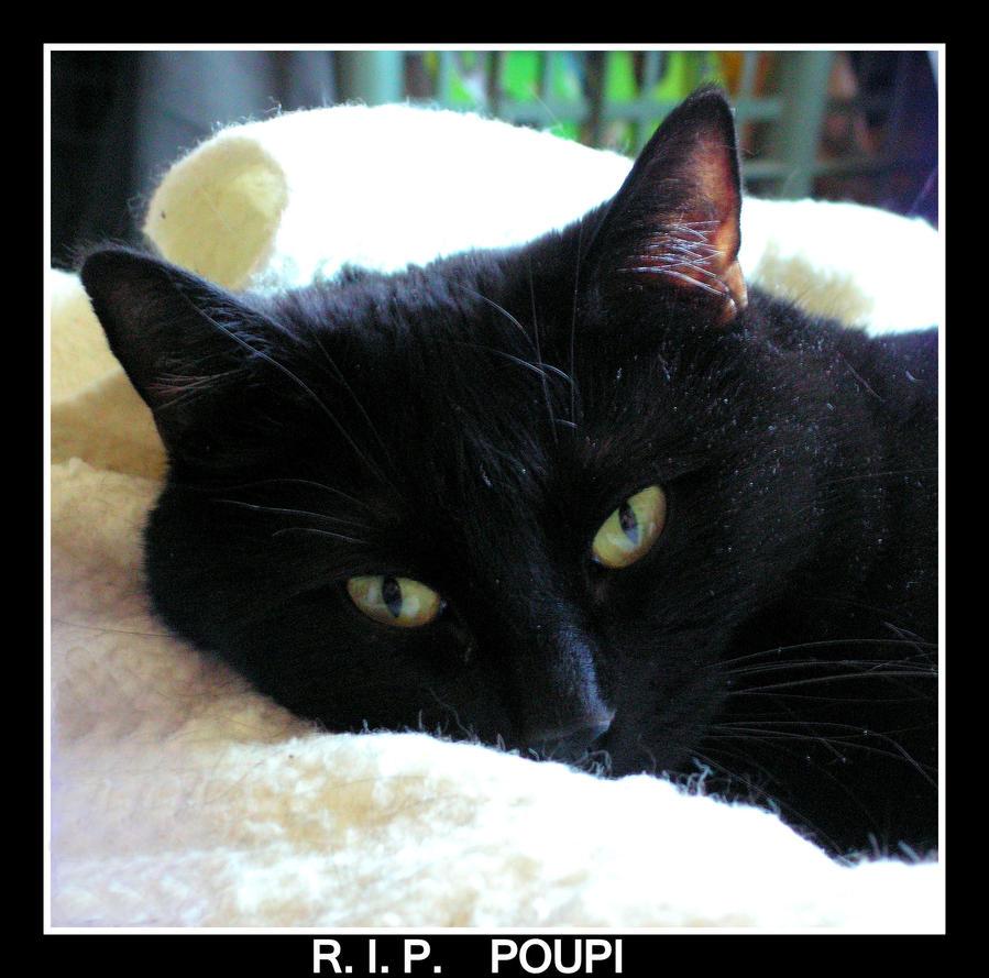 R.I.P.  POUPI by JocelyneR