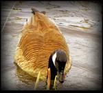 Wet Canada Goose by JocelyneR